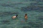 port douglas snorkelling tour
