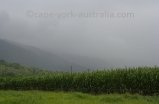 tropical monsoonal rain