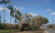 cyclone disasters