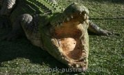 dangerous crocodiles