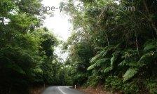 daintree rainforest location