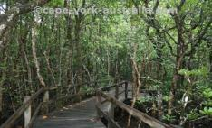 daintree walks