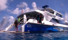 scuba diving in cairns