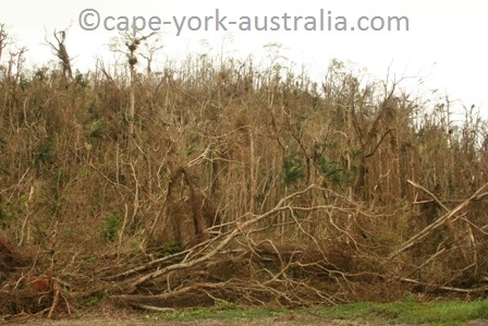 tropical rainforest after cyclone