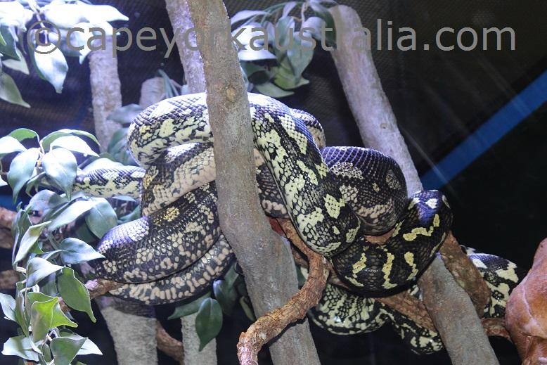 cairns aquarium python