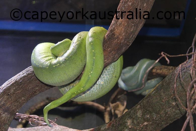 cairns aquarium snake