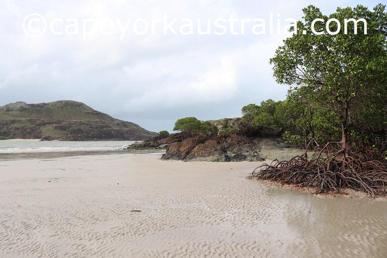 tip of australia bottom walk mangroves