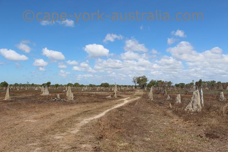 silver plains termite mounds
