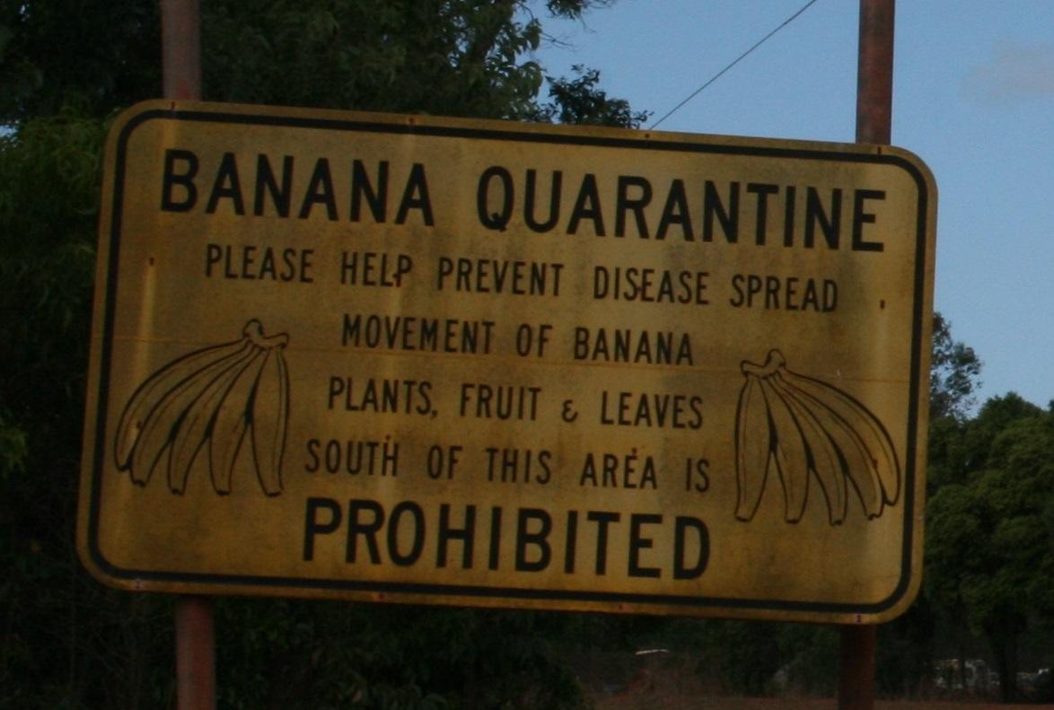 cape york quarantine rules