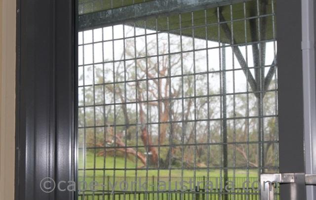 cyclone damage