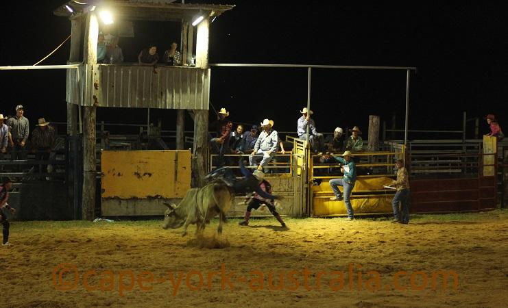 daintree station bullride