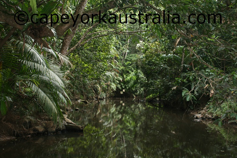 kuranda jumrum creek