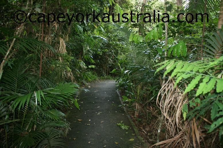 kuranda jungle walk
