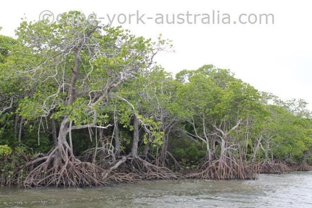 annan river mangroves