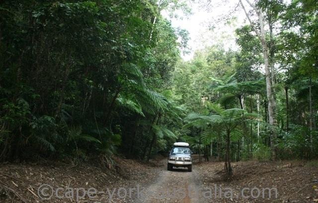 rainforest drive