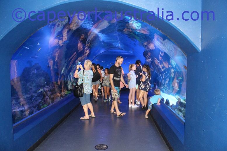 cairns aquarium visit