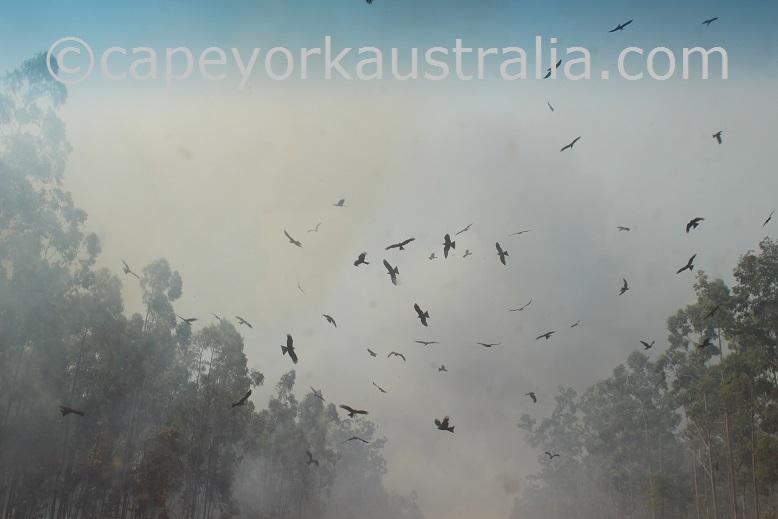 cape york bushfire