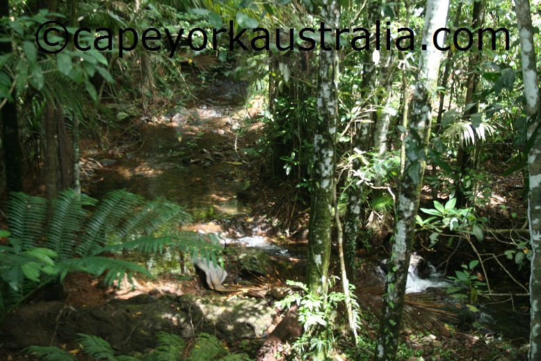 daintree discovery centre rainforest