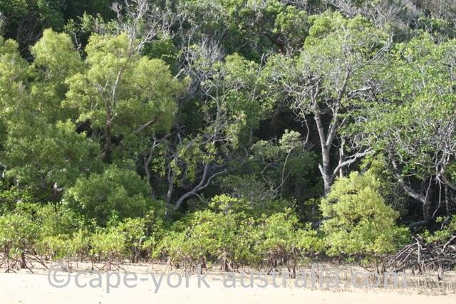 mangrove zoning