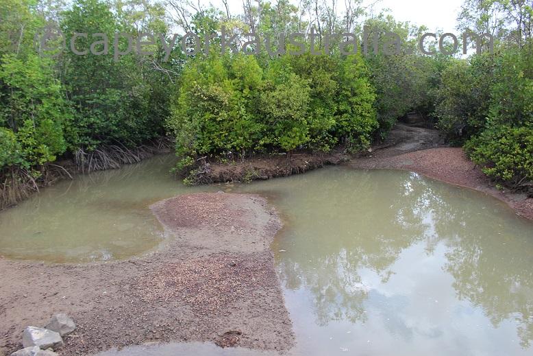 saibai mangroves