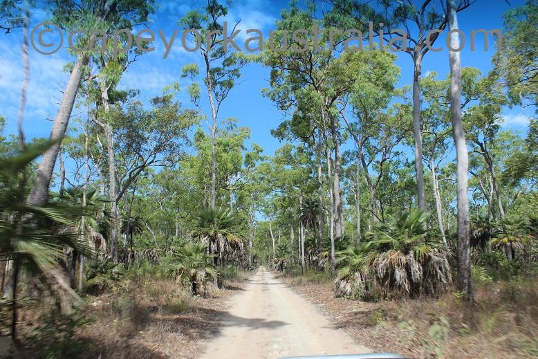 skardon river zamia palms