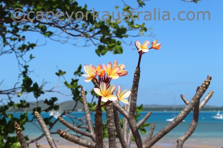 thursday island flower