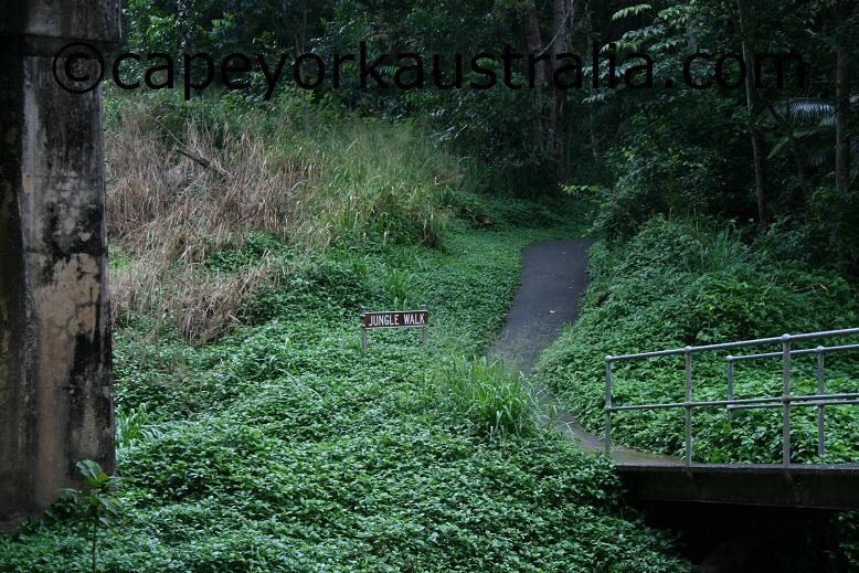 kuranda rainforest jungle walk