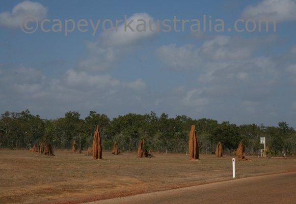 bramwell junction termite mounds