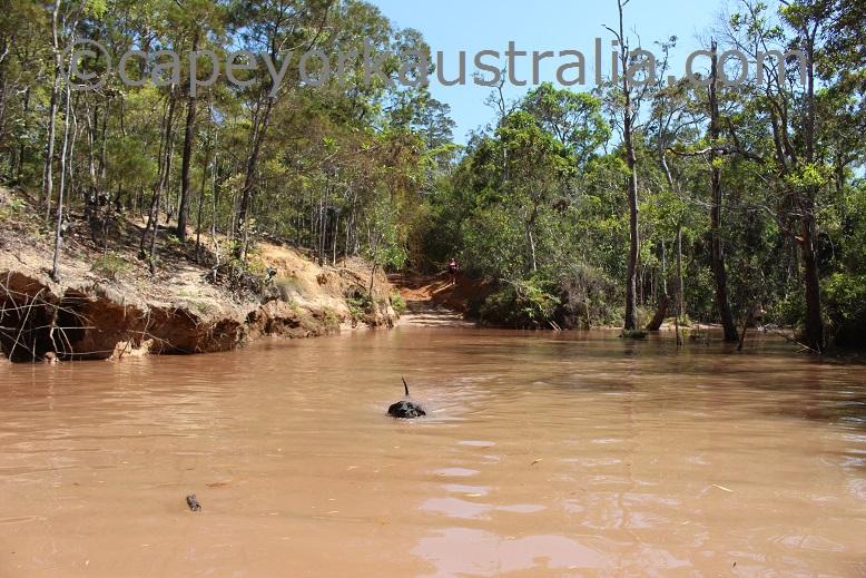 scrubby creek crossing