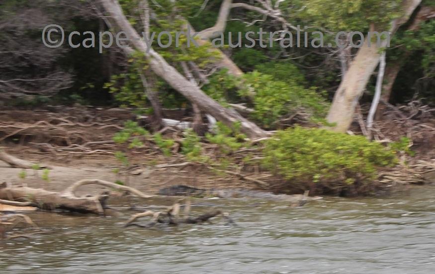 annan river crocodile