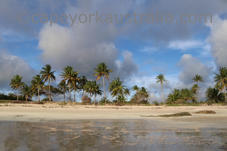 badu island beach palms