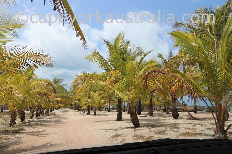 badu island palms