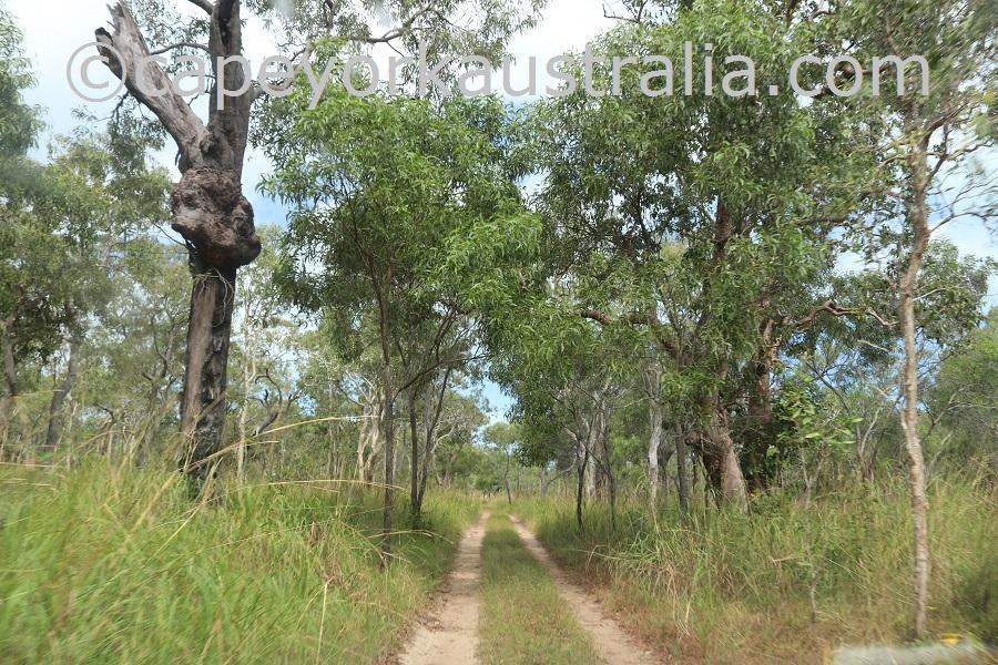 badu island yaza tracks