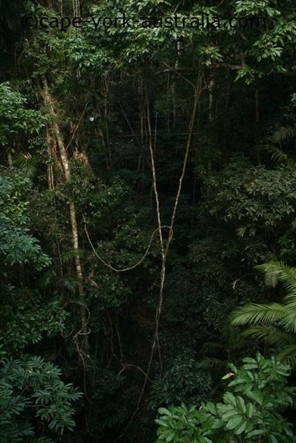 barron falls rainforest