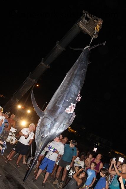 big marlin