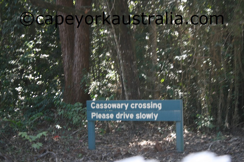 cassowary sign