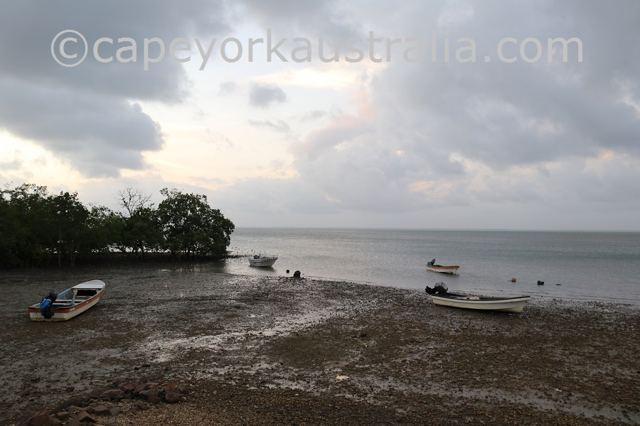 boigu island mangroves