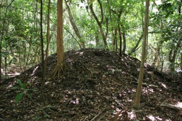 bush turkey nest