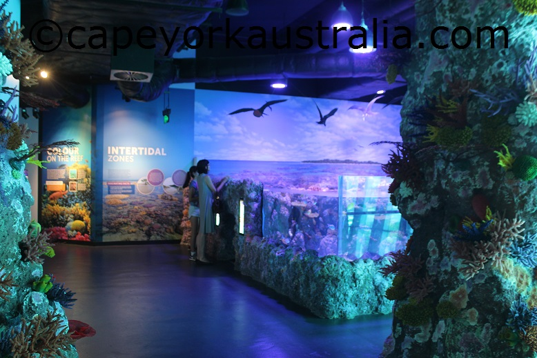 cairns aquarium coral reef ecosystem