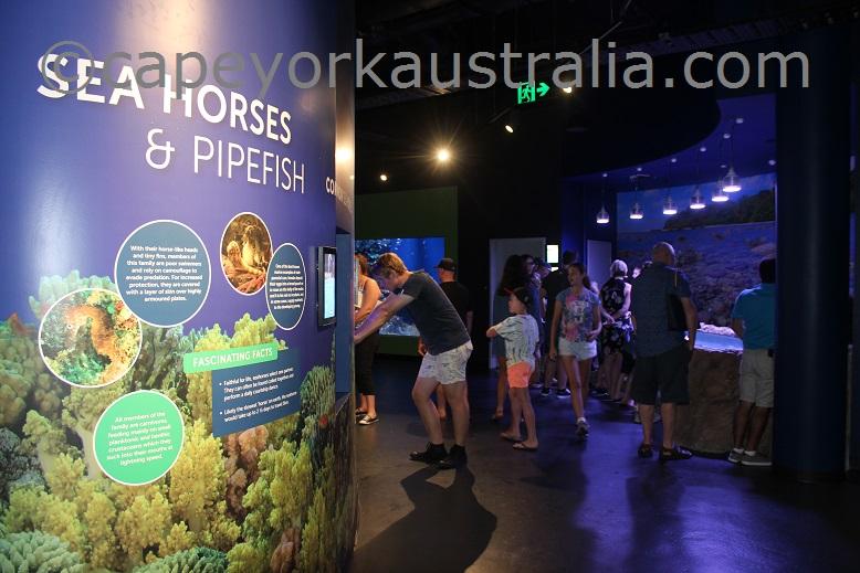 cairns aquarium coral reef ecosystem
