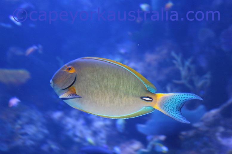 cairns aquarium coral reef fish