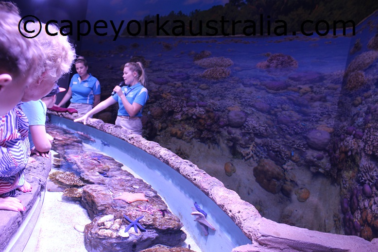 cairns aquarium coral reef talk