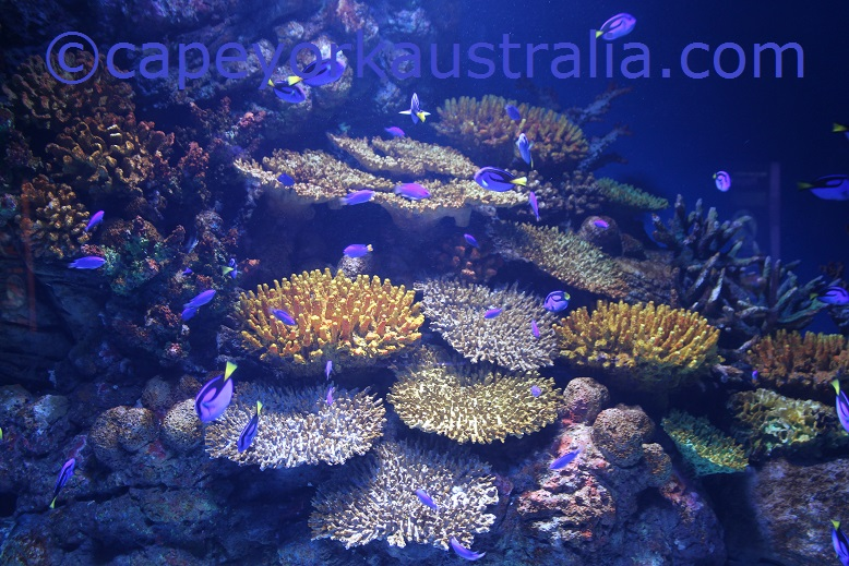 cairns aquarium coral reef