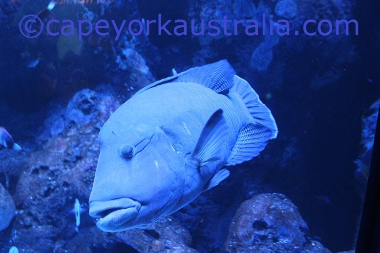 cairns aquarium fish