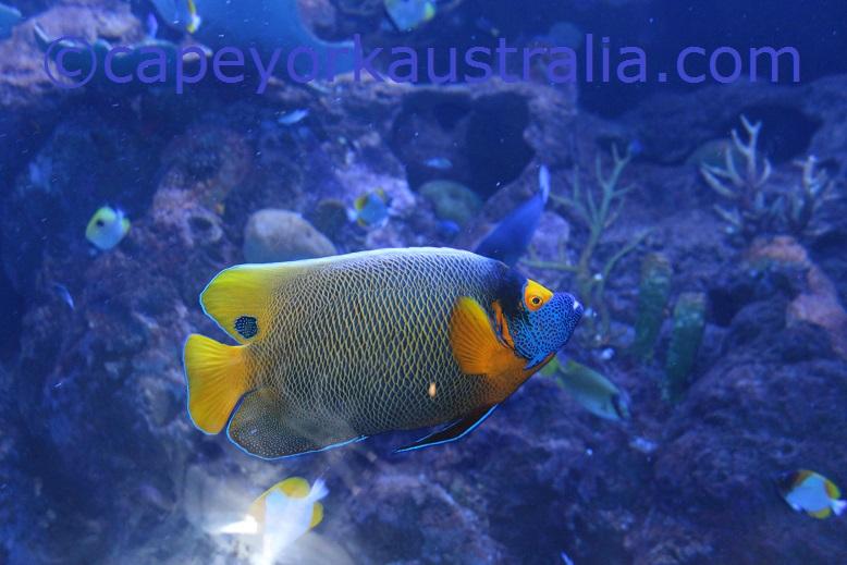 cairns aquarium reef fish