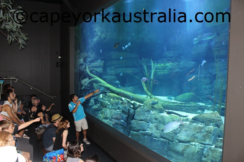 cairns aquarium river ecosystem talk