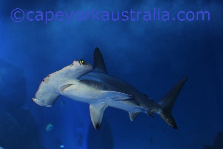 cairns aquarium shark