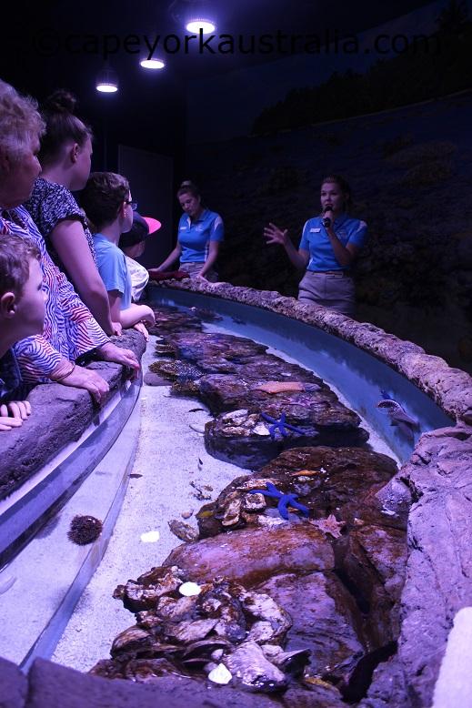 cairns aquarium touch tank talk
