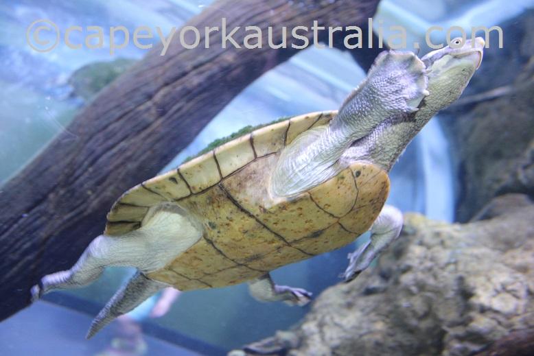 cairns aquarium turtle