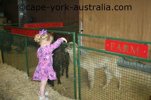 cairns show baby alpaca